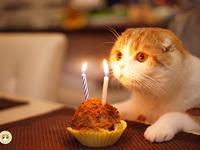 Няшного дня рождения