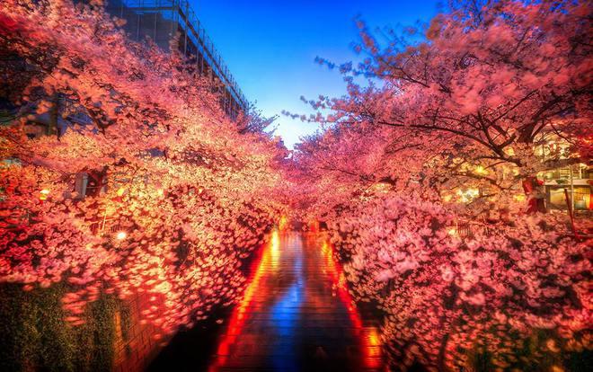 Самый весенний праздник: О-ханами в Японии