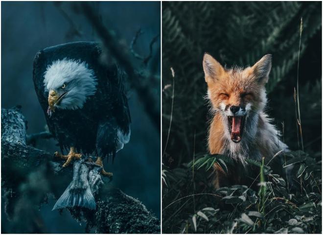 Мрачно красиво: природа на снимках тревел-фотографа Дилана Ферста
