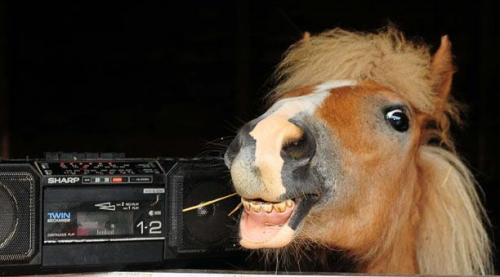 Весеолый конь
