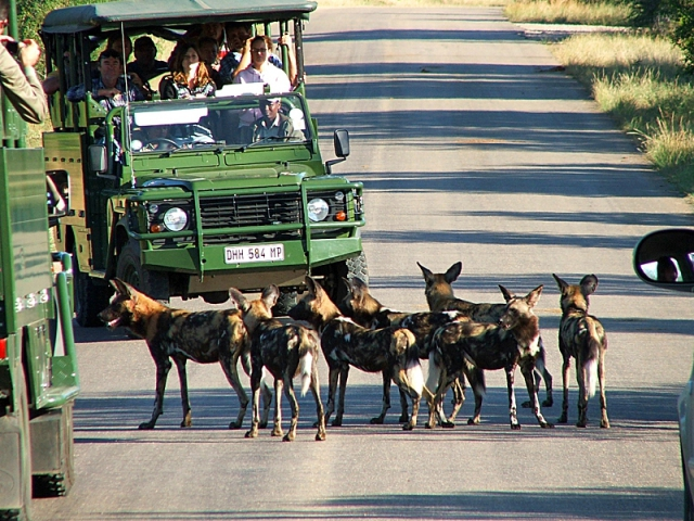 Национальные парки мира: Национальный парк Крюгер