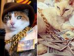 Коты-гангстеры