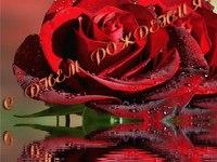 Шикарные розы на день рождения
