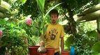 Как пересадить пальму (видео на Tochka.net)
