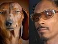 Забавное сходство. Собаки похожи на людей