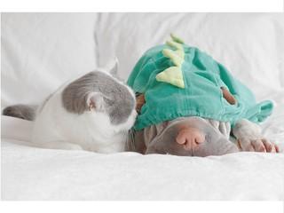 Шарпей Паддінгтон і кіт Батлер