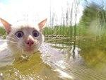 Когда плаваешь и что-то задевает твою ногу