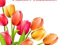 Тюльпаны на день рождения