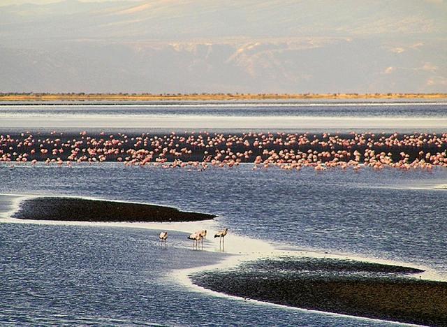 Озеро фламинго: сон наяву (фото)