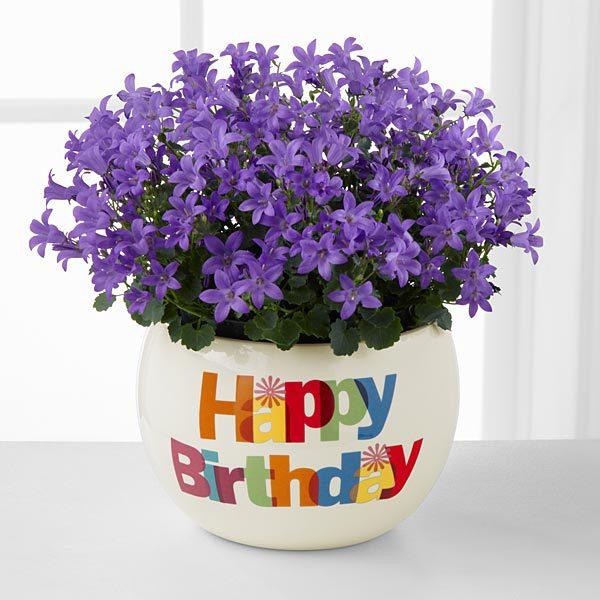 Поздравления на день рождения по смс молодой женщине короткие