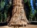 Ухватить необъятное: чтобы снять это дерево фотографы потратили 32 дня