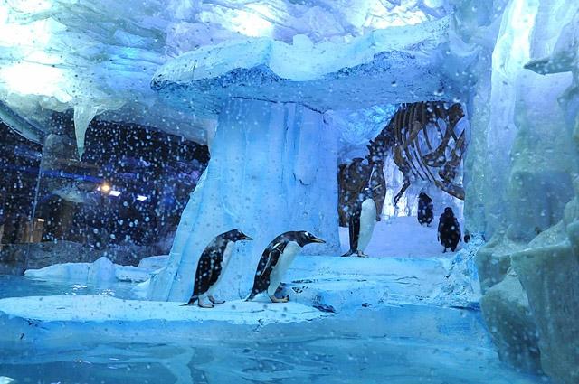 Океанариумы мира: Dubai Aquarium & Discovery Centre