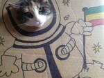 Фотосессия картонного кота