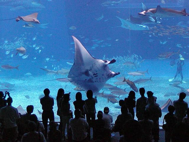 Океанариумы мира: The Okinawa Churaumi Aquarium, Япония
