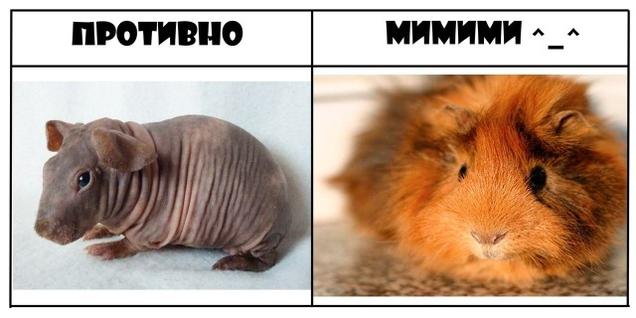 """Прикольная подборка """"Противно & Мимими"""""""