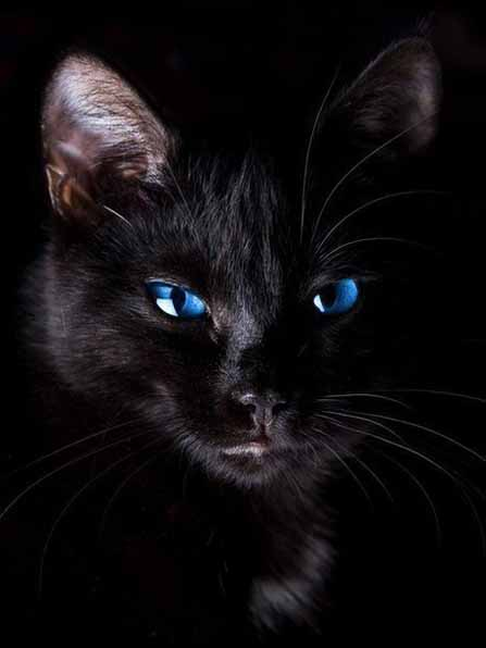кошки картинки на телефон