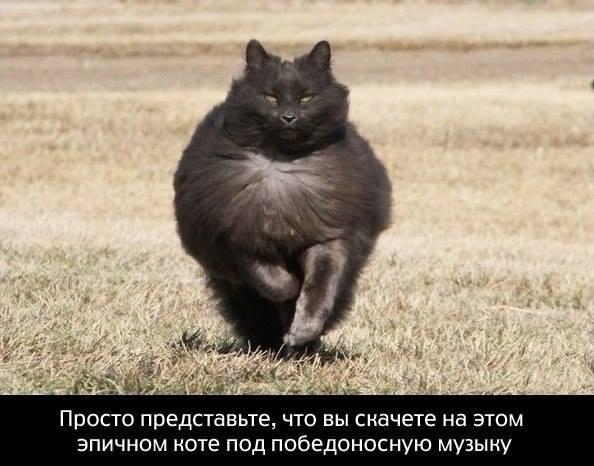 Смешной коммент с котом