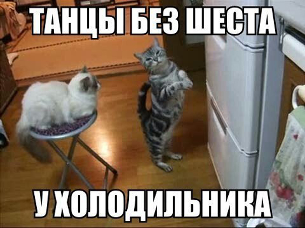 Неловкое чувство, когда коты танцуют лучше тебя