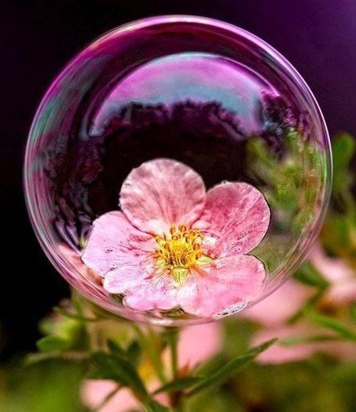 Очаровательные фотографии с пузырьками