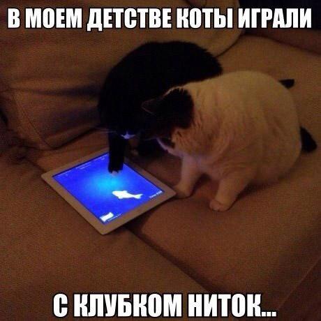 Коты, постигшие высокие технологии