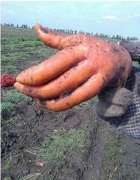 Картинки по запросу анекдот про морковку