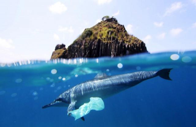 Больше, чем фото. Дельфин плывет за хлебом в магазин.