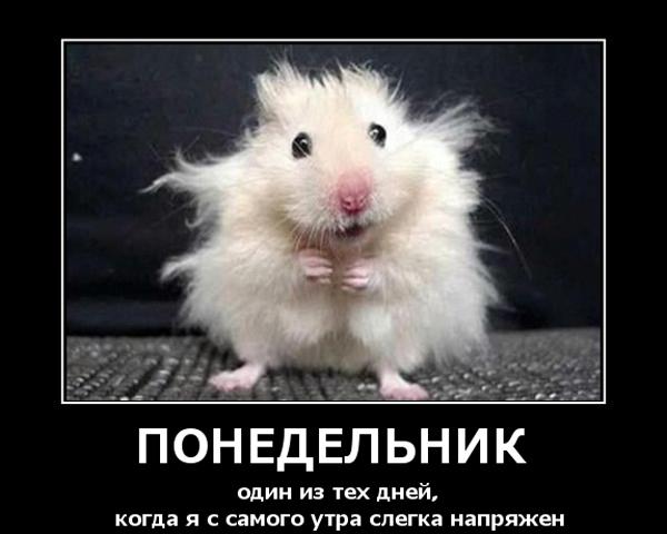 Мыши Приколы, анекдоты, картинки, демотиваторы на