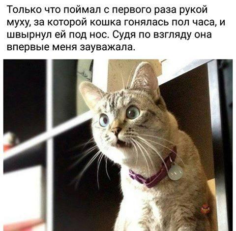 Момент, когда кот зауважал хозяина