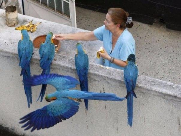 «Голуби» в разных странах мира