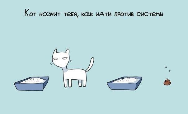 9 причин иметь кота