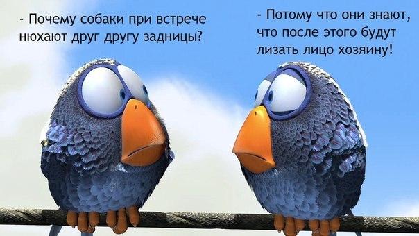 Мемы. Умные птички