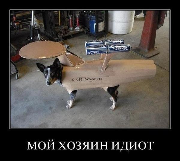 ТОП лучших демотиваторов с собачками