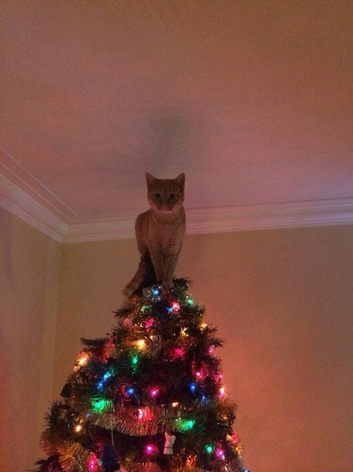 В доме с котом может быть только одна звезда