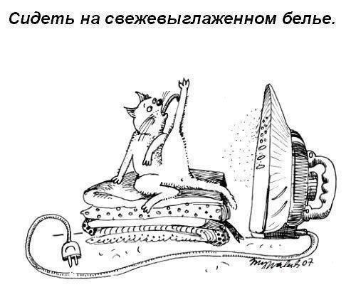 Что обожают делать коты