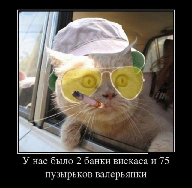 Классные картинки с котами