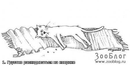 наши котики)