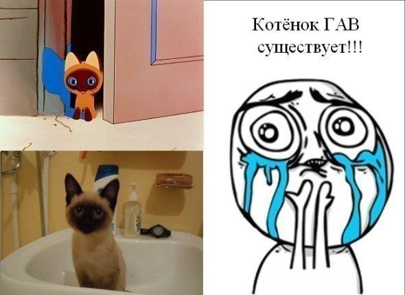 Картинки мемы приколы про котов, для супруги