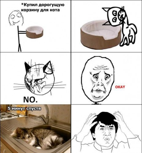Котячая логика