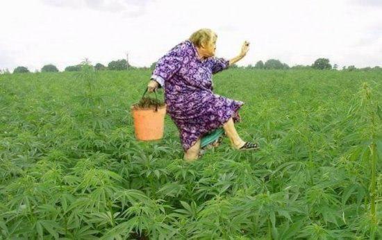 Баба Вера на поле чудес..
