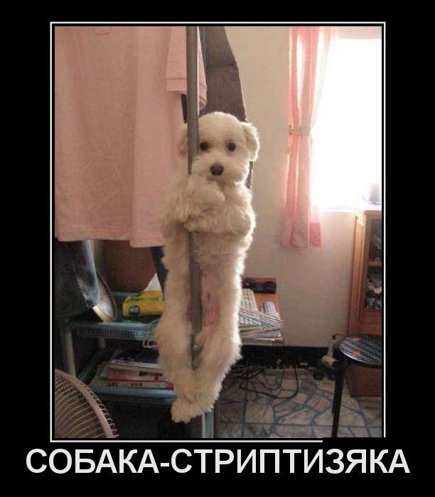 Смешные демотиваторы про животных 50