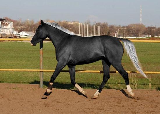Обладенно красивые лошади